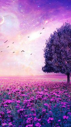 【新着3位】紫色の花畑