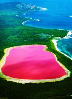 The only living organism in Lake Hillier in Australia is Dunaliella Salina, the microorganism that causes the salt content in the lake to create a red dye, hence the colour. This life form is called, halophile / extremophile.