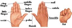 Falibo - Learn English As a Second Language - Learn Through Pictures : Feet and Hands