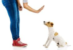 6 Ways to Get the Dog Ready for Your Baby | petMD