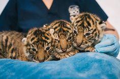 Las 37 fotos de crías de animales más adorables de 2014