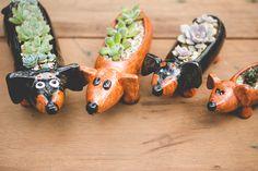 Suculentas em vasinhos de cerâmica em formato de cachorro. #suculentas #succulents #dogs #vasos #vases