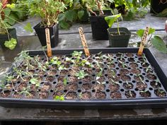 Starting Plants from Seed (Indoors). With proper care and timing you can raise healthy vegetable, flower and herb plants indoors to plant outdoors from seed. Follow this step-by-step visual guide if your want to start your own garden indoors!