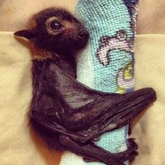 baby bat with his security hold