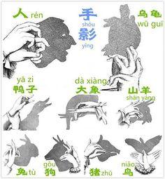 le ombre cinesi :)