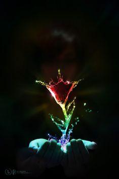 The Scarlet Flower by ~Pr3t3nd3r on deviantART