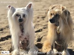 Chic fashion for pets Chinese Crested Dog, Adorable Dogs, Sams, Animal Fashion, Cousins, Animals, Houndstooth, Vintage Flowers, Fur