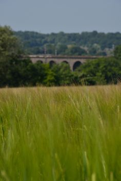 Viaduct, Hertfordshire Photography, Photograph, Fotografie, Photoshoot, Fotografia