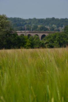 Viaduct, Hertfordshire
