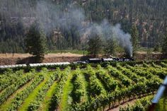 Train Vineyard Kettle Vally Stream Railway, Summerland Steam Railway, Day Trip, Summer Days, Kettle, Trains, Vineyard, Outdoor, Outdoors, Tea Pot