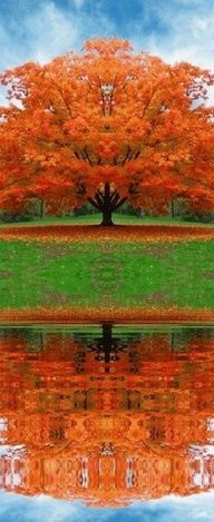 Gorgeous sugar maple tree and reflection; just beautiful, can't beat a sugar maple tree in the fall. Fall Pictures, Pretty Pictures, Nature Pictures, Beautiful World, Beautiful Places, Belleza Natural, Belle Photo, Amazing Photography, Photography Pics