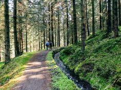 Die schönsten Wanderwege am Oberharzer Wasserregal Seen, Places To Travel, Sidewalk, Country Roads, Camping, Advent, Trips, Wanderlust, Road Trip Destinations