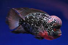 Please help identify - Arofanatics Fish Talk Forums