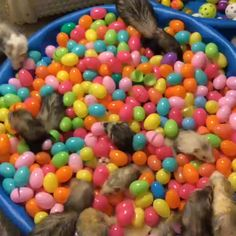 """Ermagawd ferrets playing in plastic easter eggs! by Elyse Meyer """" """" This is exactly the kind of quality content I look for on tumblr."""