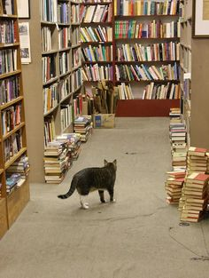 Beckham's Books, New Orleans. I pet the kitty while looking at books.