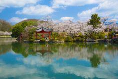 庄原上野公園 (Shobara Ueno park) 桜咲く庄原上野公園 絶景NIPPON #sakura #桜