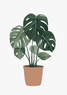 Super Ideas For Plants Background Monstera Plant Painting, Plant Drawing, Plant Art, Plant Wallpaper, Plant Illustration, Botanical Illustration, Photomontage, Minimalist Art, Aesthetic Art