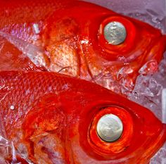 Red Fish Tsukiji Fish Market Tokyo. silver eyes. ice. iced. dead.