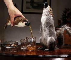 """""""A cerveja mais forte, mais cara e mais chocante do mundo"""", - 55% de álcool e vem envolta por esquilos reaproveitados de atropelamentos."""