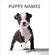 How did you come up with your dog's name? Ace, Max, & Buddy are top male names...Bella, Abby, and Daisy for the ladies...