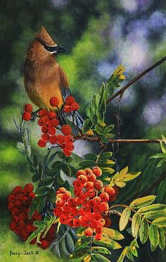 cedar waxwing.  they love the mountain ash berries.