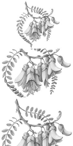 Pencil Design, Pencil Illustration, Tree Branches, Flower Art, Nativity, How To Draw Hands, Flowers, Art Floral, Christmas Nativity