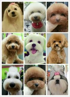 More Asian inspired pet trims so cute♥♥♥