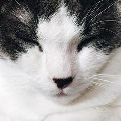 ❄ . #RussellTheKitty instagram by @studiogabe // .SG My Best Friend, Best Friends, Nyan Nyan, Cute Creatures, Fuzz, Bern, Kitty Cats, Kittens Cutest, Pie