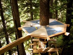 Poor Carpenter Builds An Incredible Treehouse In The Wilds Of Canada