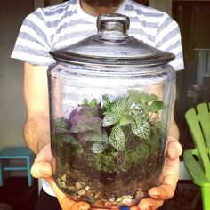 Homemade closed terrarium