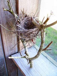 This is called 'branch nest', I love it and although no living bird would live in it, one of my sculpted birds would be very happy:)