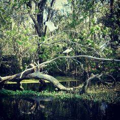 St. Johns river FL.