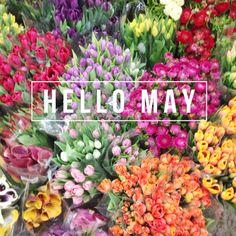 hello + may