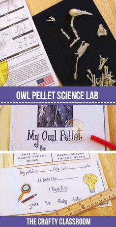 Owl Activities for a Owl Preschool Theme Owl Preschool, Preschool Themes, Owl Classroom, Kindergarten Classroom, Classroom Decor, Owl Activities, Hands On Activities, Teaching Science, Science For Kids