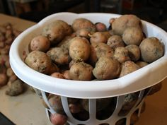 Curing potatoes before winter storage is an important process that will help assure longer storing times for your potato crop. Canned Potatoes, Storing Potatoes, Canned Pickled Beets, How To Store Tomatoes, Red Cabbage Salad, Planting Potatoes, Vegetable Storage, Vegetable Garden, Frozen Broccoli