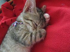 かわいく寝るのも、しごとしごと。 via ilove.cat