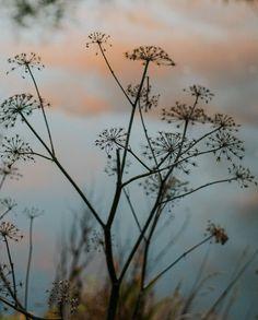 Celestial, Sunset, Winter, Flowers, Plants, Outdoor, Utrecht, Instagram, Gentleman