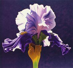 Mell, Ed - Ed Mell - Morning Iris