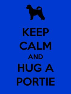 Hug a Portuguese Water Dog Today!