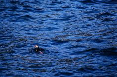 Where To Find Puffins In Norway! - Hand Luggage Only - Travel, Food &…