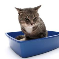 Feline Urinary Tract Infection