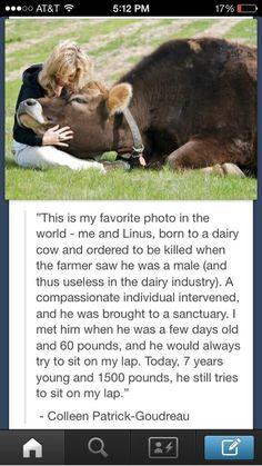 Love this! The human animal bond always amazes me!