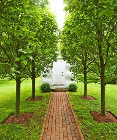 Rows of pear trees, traditionally placed boxwoods, a stone step, and a Colonial shed -- consider me enchanted.  Via Traditional Home...