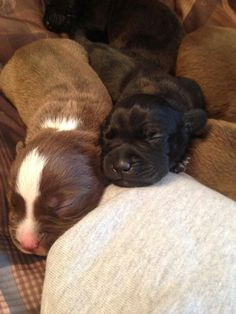 Two baby puppies sleeping