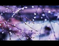 spring rain by BaxiaArt on DeviantArt All Things Purple, Purple Rain, Deviantart, Seasons, Spring, Nature, Life, Color, Naturaleza