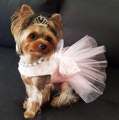 Dog tutu dress Amy special ocasion dog dress dog party | Etsy
