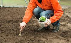 Zahradníkův kalendář na celý rok: kdy sít a sázet zeleninu, květiny, dřeviny? - Užitková zahrada