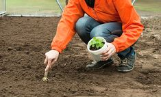Zahradníkův kalendář na celý rok: kdy sít a sázet zeleninu, květiny…