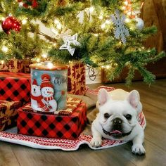 Did someone have a bulldog on their Christmas wish list? #bulldogsforchristmas #buldog