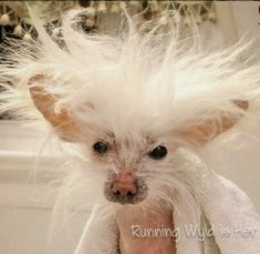 Think you have very bad hair day's I like to differ on that one! Funny Animal Pictures, Funny Animals, Very Bad, Bad Hair Day, Nice, Funny Animal Pics, Funny Animal, Hilarious Animals, Funny Animal Comics